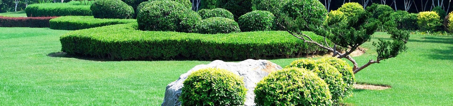 L 39 lagage et l 39 abattage d 39 arbres versailles dans les for Entretien jardin versailles